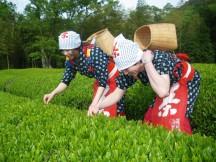 茶摘み衣装でコスプレ茶摘み体験♪と季節のフルーツ大福作り体験&鉄板ランチバイキング☆