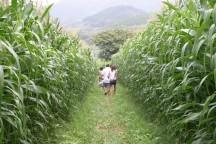 夏真っ盛り!とうもろこし畑の巨大迷路を攻略せよ!酪農王国でアイスクリーム作り体験と絶景ロープウェイで空中散歩♪&地産地消のランチブッフェ!マスクメロン狩り♪