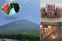 夏のやまなし満腹満足大満喫! 人気の桔梗信玄餅詰め放題と旬のフルーツ狩り♪雲上の富士山五合目へ行こう!