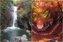 やまなし紅葉紀行 秋色に染まる渓谷「昇仙峡」と河口湖もみじ回廊&ぶどう狩り食べ放題♪日帰りバスツアー!