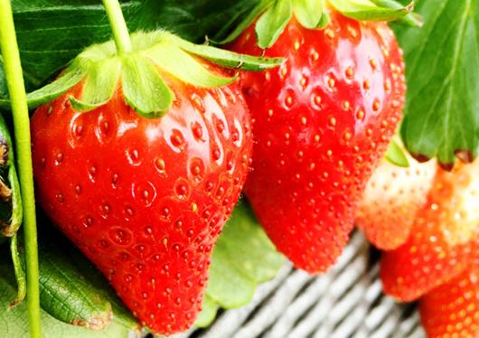 果物狩り・収穫体験