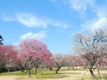 ≪新宿≫梅の香りに誘われて♪日本三名園『水戸偕楽園の梅まつり』・あまーいイチゴ狩り&那珂湊おさかな市場できままにランチ