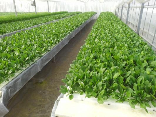板山農園 新鮮野菜の収穫体験