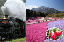 秩父感動体験!ピンクの絨毯羊山公園の芝桜とレトロに感動!迫力のSL列車&完熟いちご狩り!ランチはわいわいBBQ♪