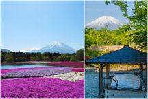 富士山麓でポカポカ春体感♪富士芝桜まつり&富士を望む露天風呂『山中湖温泉 紅富士の湯』
