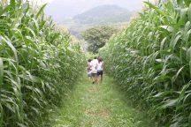 夏真っ盛り!とうもろこし畑の巨大迷路を攻略せよ!うま~い鉄板ランチバイキング&富士を望む絶景ロープウェイで空中散歩♪