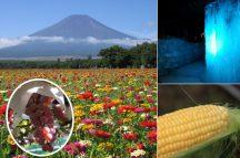 富士山麓でひんやり洞窟プチ探検&トウモロコシの収穫体験に絶景のお花畑♪ぶどう狩りと富士溶岩焼きランチ