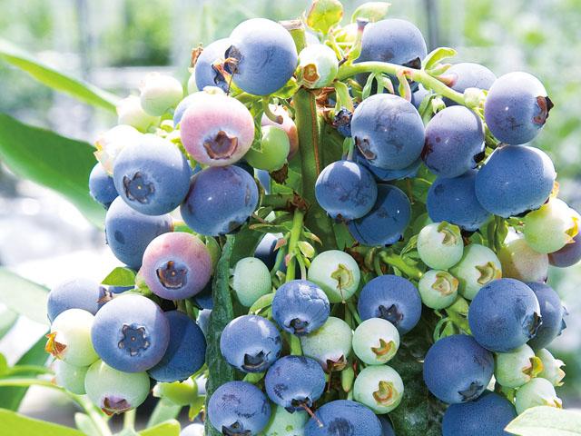 ●【博多発着】日帰りバス旅 絶景!海上のアルプス青海島クルーズと甘酸っぱ~いブルーベリーが食べ放題♪