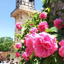 バラの花咲くハイジの村