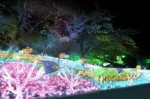 キラメキの冬!関東最大級約600万球の光の祭典『さがみ湖イルミリオン』と人気の桔梗信玄餅詰め放題&ランチビュッフェ♪
