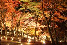 【静岡】きらめく秋旅!幻想的な修善寺紅葉ライトアップ!アツアツ海鮮浜焼き食べ放題&みかん狩り
