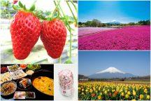やまなしの春! 春の花咲く名所散策と人気の桔梗信玄餅詰め放題!シーズンラスト完熟いちご狩り