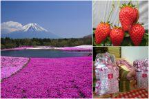 やまなしの春!富士芝桜まつりと人気の桔梗信玄餅詰め放題!シーズラスト完熟いちご狩り