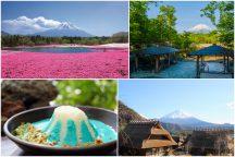 富士山麓でポカポカ春体感♪富士芝桜まつり&富士を望む露天風呂『山中湖温泉 紅富士の湯』・SNS映えする話題の『青い富士山カレー』ランチ
