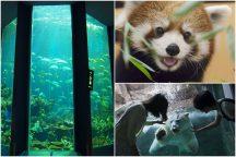 しずおかで過ごす夏休み♪ おどろきと感動の『日本平動物園』と海の不思議を体感!学べる水族館『東海大学海洋科学博物館』&清水港ミニクルーズにランチビュッフェ食べ放題!日帰りバスツアー