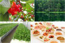初夏を味わう♪ さくらんぼ狩り食べ放題とイタリアンランチバイキング!神秘の絶景《御射鹿池》&新鮮野菜の収穫体験