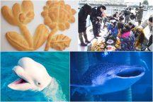 3日間限定!《食育旅》八景島で育った『わかめ』収穫体験&世界にひとつだけ『オリジナルパン作り』体験♪八景島シーパラダイスで海の生き物たちに癒されよう♪