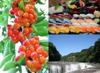 上州さくらんぼ狩り食べ放題&夏におすすめ!海と畑のサッパリ寿司食べ放題!マイナスイオンいっぱい「吹割の滝」でリフレッシュ♪