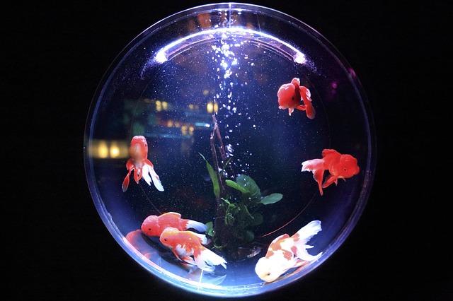 金魚ミュージアム