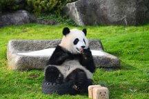 可愛い動物たちに会いに行こう♡Go‼Go‼アドベンチャーワールド♪≪たっぷり5時間滞在≫
