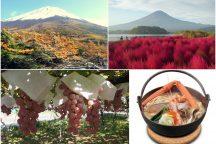 富士山紅葉ドライブ 富士山奥庭の絶景紅葉と雲上の五合目散策&ふわふわコキアと秋の味覚ぶどう狩り