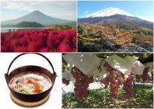 《GoToトラベル対象》富士山紅葉ドライブ 富士山奥庭の絶景紅葉と雲上の五合目散策&ふわふわコキアと秋の味覚ぶどう狩り
