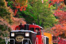 秋の京都で紅葉観賞♪嵯峨野トロッコ列車と鈴虫寺へ行く日帰りバスツアー