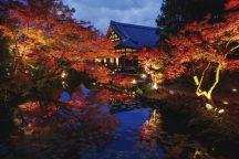 【夕食付】秋の京都で紅葉を堪能!秋ならではの絶景・紅葉ライトアップ観賞日帰りバスツアー
