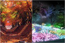 秋を楽しむ!紅葉&イルミ♪ 紅葉の河口湖もみじ回廊と関東三大イルミネーション認定《さがみ湖イルミリオン》&ハーバリウム作り体験♪