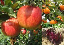 フルーツ狩り&収穫体験