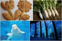三浦ブランド『三浦ダイコン』収穫と世界にひとつだけ『オリジナルパン作り』体験&八景島シーパラダイスで海の生き物たちに癒されよう♪《食べ放題のランチバイキング付》