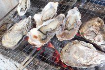 カキ小屋でアツアツ牡蠣約1kg・6種食べ比べ&岡山県最大級のいちご園で最大6品種のいちご狩り食べ放題♪