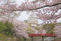 お花見特集【お弁当付】桜の名所・世界遺産・姫路城へ行く日帰りバスツアー