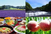 <新宿発>夏の涼を求めて♪5万株のたんばらラベンダーパーク&吹割の滝散策ともも・野菜狩り体験!
