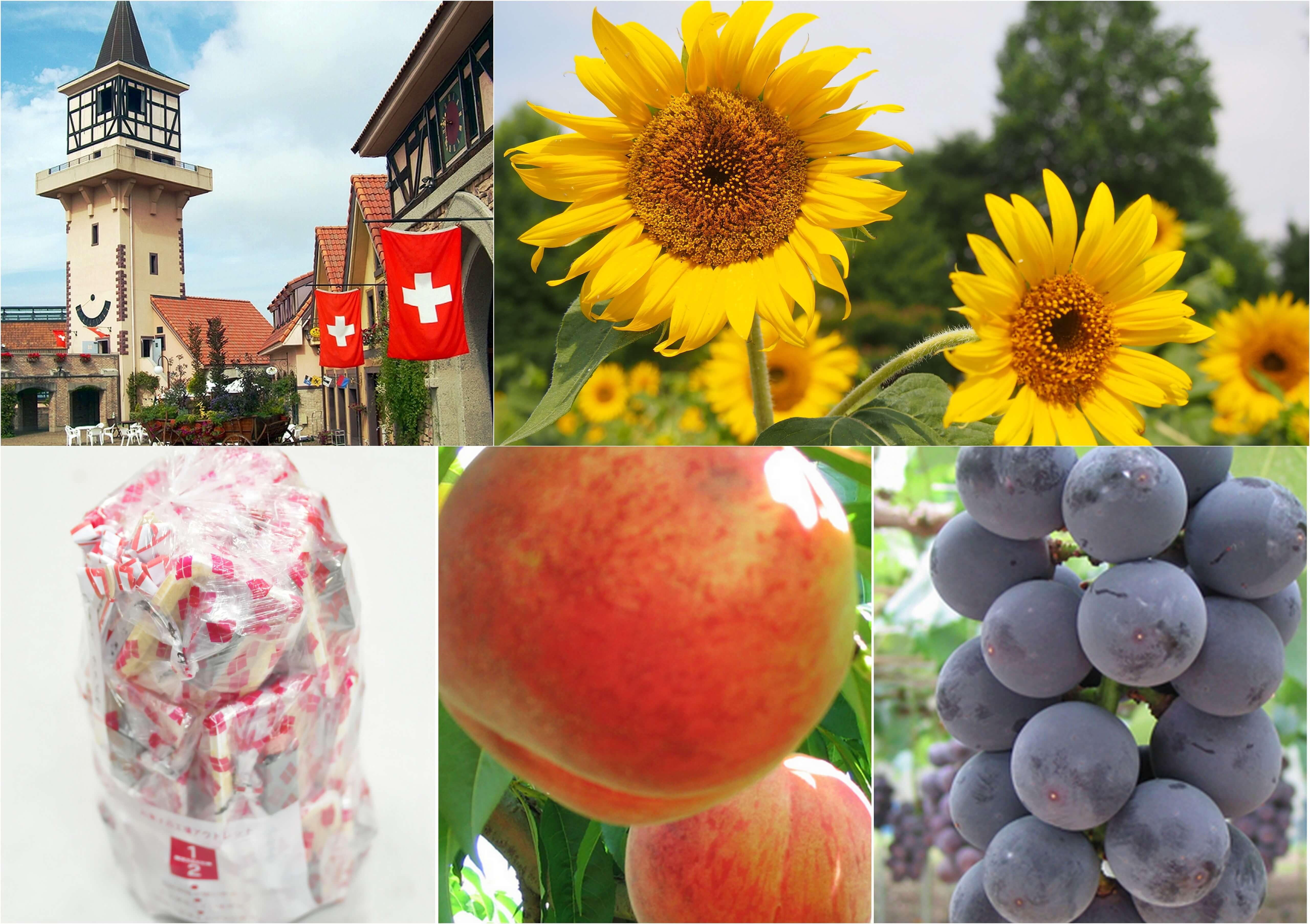夏の花咲くハイジの村&ハーブ庭園散策!《大人気》桔梗信玄餅の詰め放題に旬のフルーツ狩りも楽しもう!