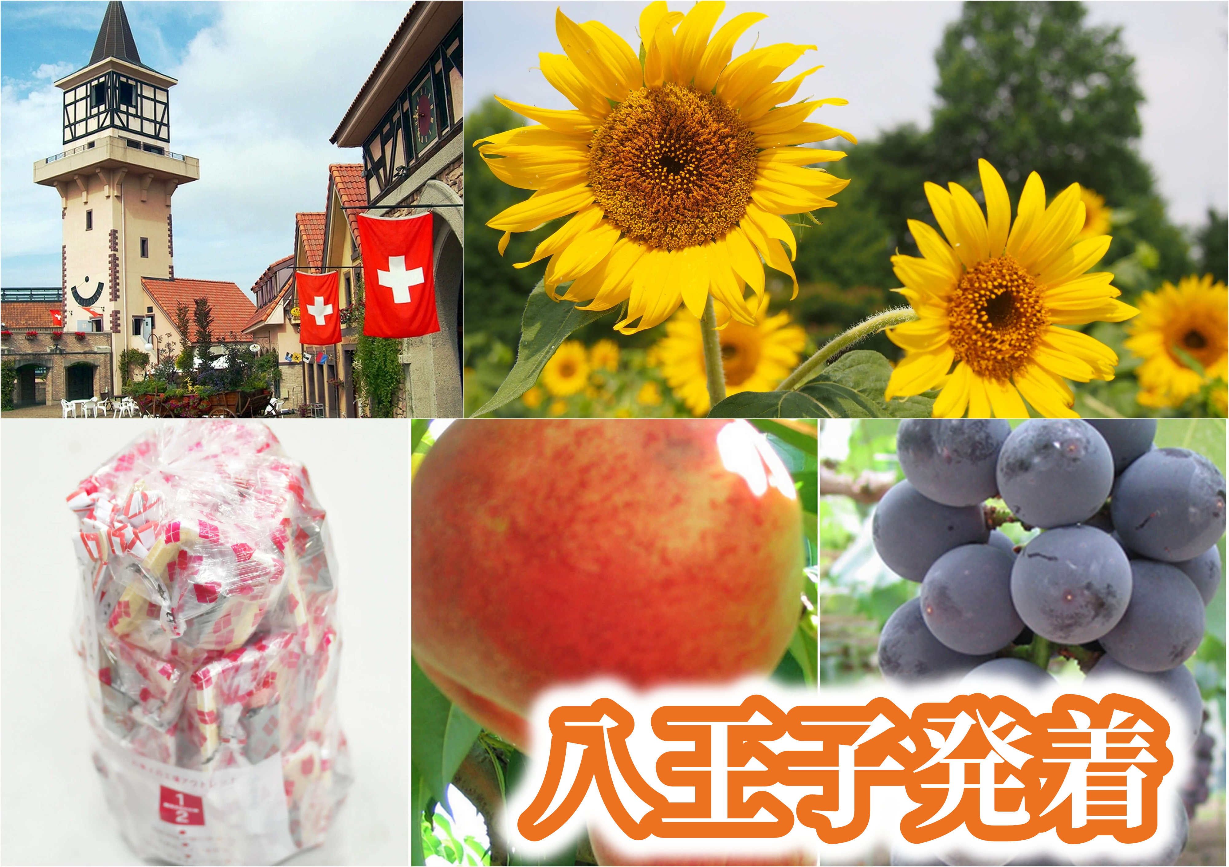 <八王子発>夏の花咲くハイジの村&ハーブ庭園散策!《大人気》桔梗信玄餅の詰め放題に旬のフルーツ狩りも楽しもう!