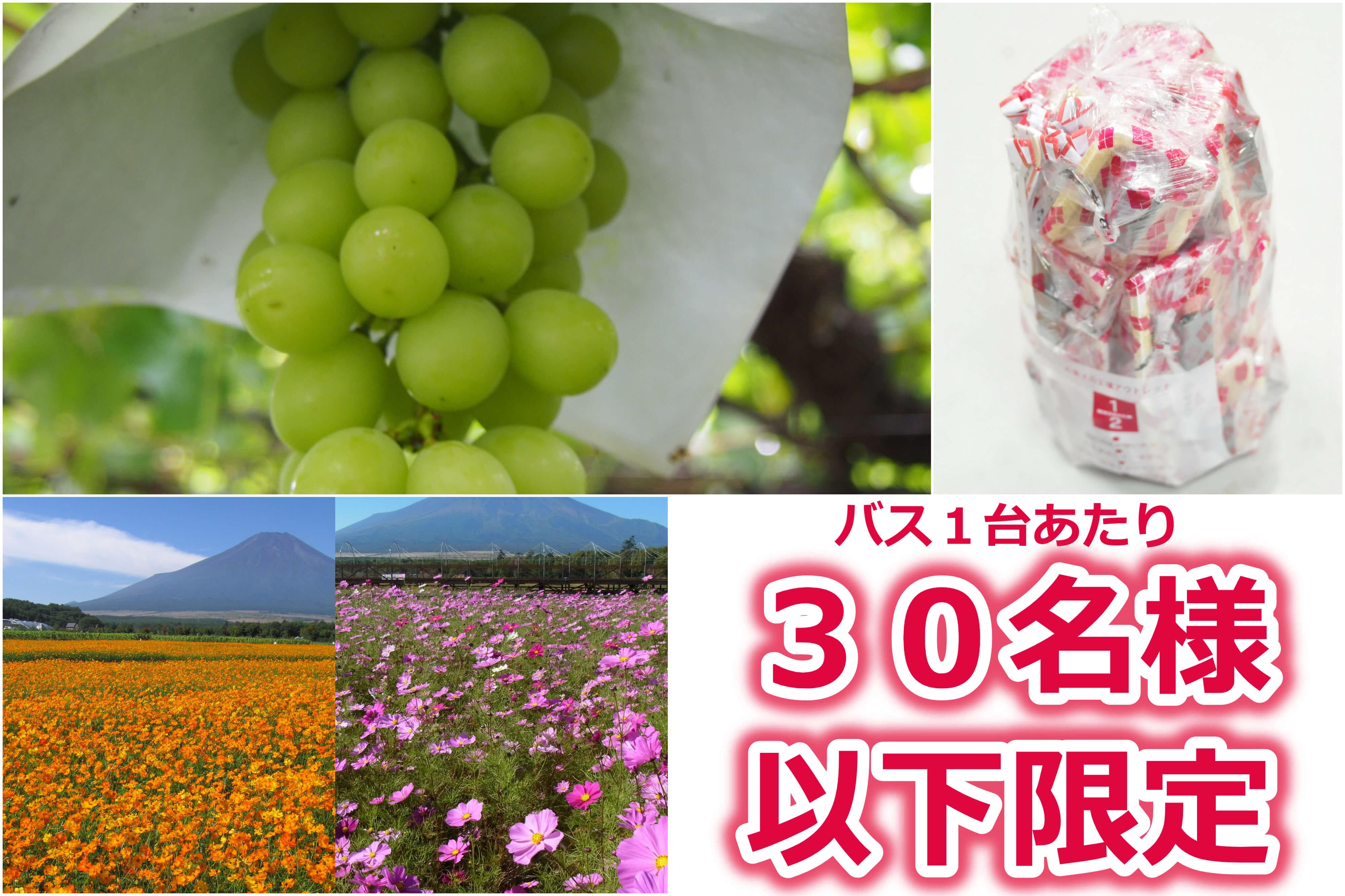 富士山麓で初秋の花咲く花畑散策♪シャインマスカット狩りと人気の桔梗信玄餅詰め放題!