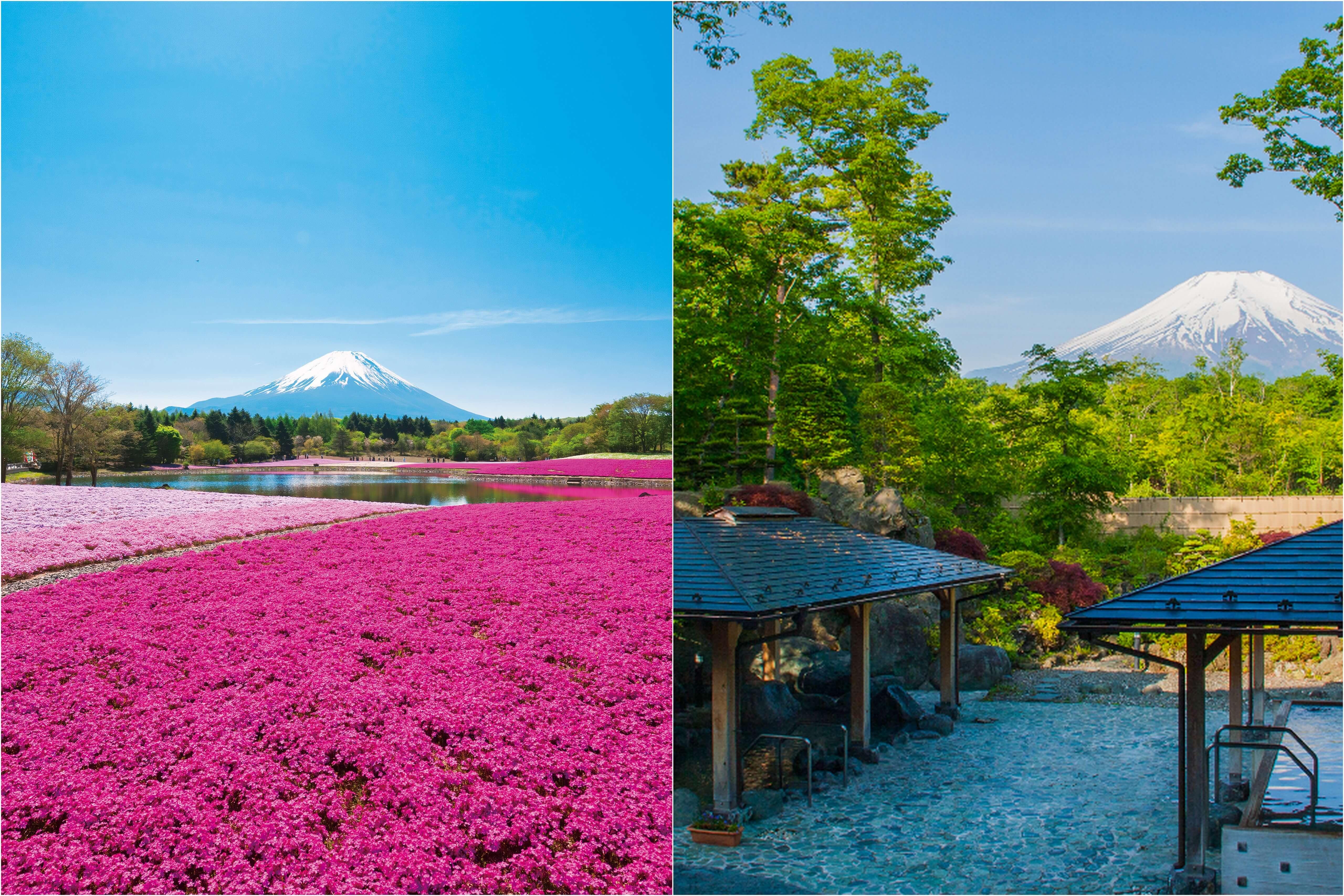 富士山麓でポカポカ春体感♪富士芝桜まつり&富士を望む露天風呂『山中湖温泉 紅富士の湯