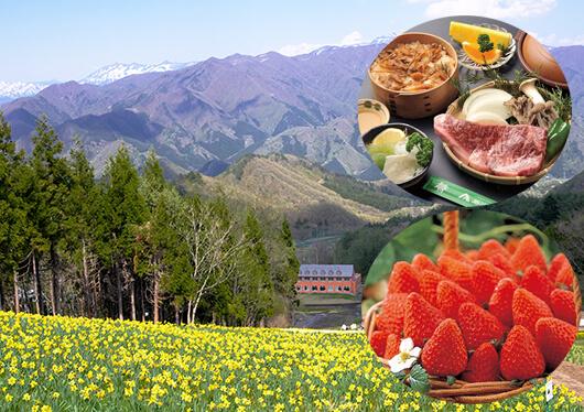 北関東最大級100万株の水仙が咲き誇る天空の花園へ!赤城牛ステーキのランチ&いちご狩り食べ放題と新緑の吹割の滝散策♪
