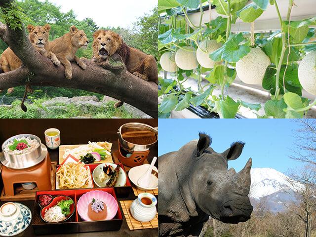 迫力満点!大自然の冒険へレッツゴー!富士サファリパーク&マスクメロン1玉狩りとしらす釜まぶし御膳の昼食!