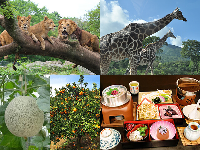 野生の世界へようこそ!迫力満点!富士サファリパーク&しらす釜まぶし御膳の昼食&季節のフルーツ狩り♪