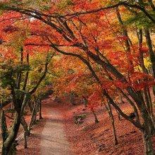 修善寺自然公園もみじ林