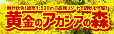 黄金のアカシアの森-秋の味覚三大食べ放題-日帰りバスツアー!