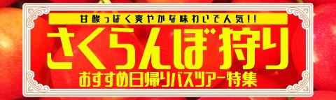 さくらんぼ狩り日帰りバスツアー特集2017