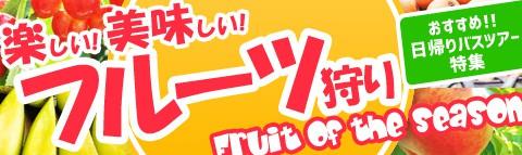 楽しい!美味しい!季節の味覚!フルーツ果物狩り特集