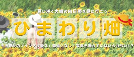 夏の代表花「ひまわり」を見に行こう♪