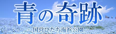青の奇跡!ネモフィラ鑑賞日帰りバスツアー特集