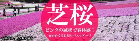 ピンクの絨毯で春体感!『芝桜』満喫日帰りバスツアー!