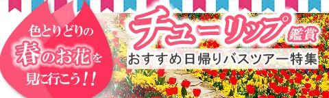 春を代表するお花『チューリップ』を見に行こう!