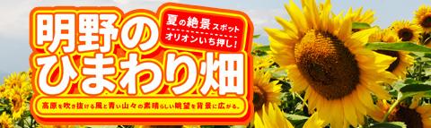 夏休み日帰りバスツアー!山梨・明野のひまわり畑へ